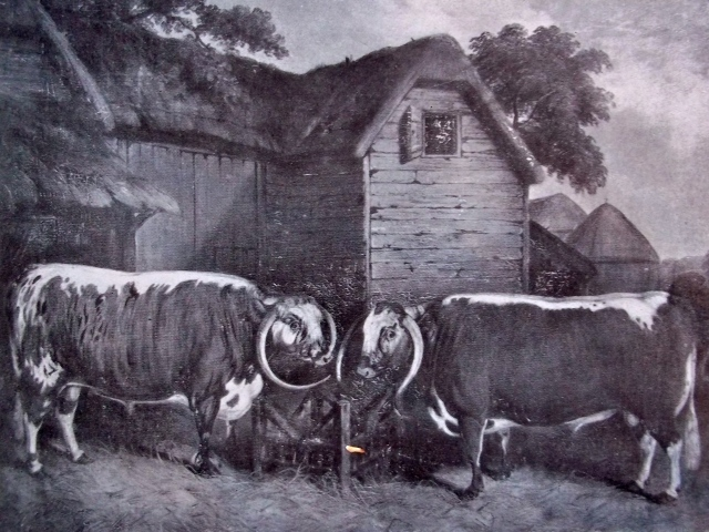 OLD ENGLISH CATTLE AT LITTLE WYRLEY: AN OIL PAINTING SIGNED BY E.M. FOX AND DATED 1855