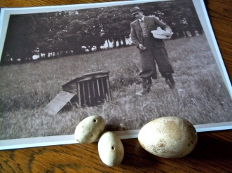 We found dummy partridge eggs - as well as china hens' eggs in the croft.